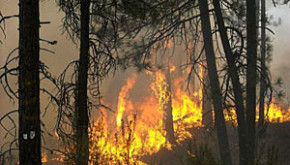 Wildfire burning trees in eastern Washington state. Courtesy of Washington Department of Natural Resources.