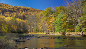 Northern forest in fall foliage next to a stream courtesy of David Whiteman