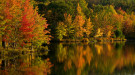 Northern forest in fall foliage next to a lake courtesy of David Whiteman