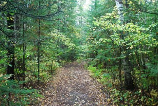 Wooded trail in Baudette Lake of the Woods School Forest. Photo courtesy of Eli Sagor, Flickr.